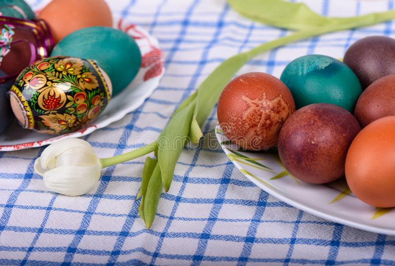 Easter eggs and tulip royalty free stock image