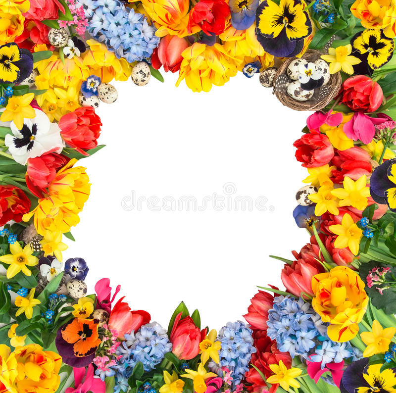 Easter eggs with tulips, narcissus, hyacinth and pansy blossoms. Flower frame over white background no shadow stock images