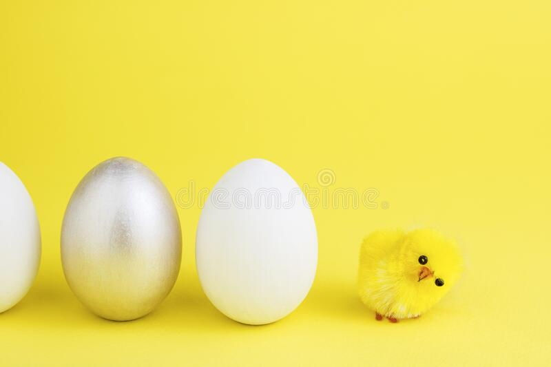 Easter eggs on a yellow background, next to an easter yellow chicken. Easter concept. Copy space royalty free stock photography