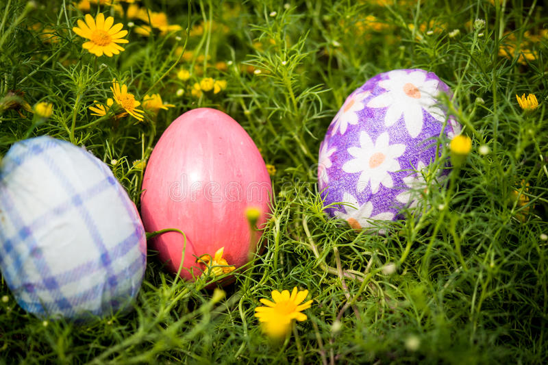 Easter eggs and yellow daisy flower stock images