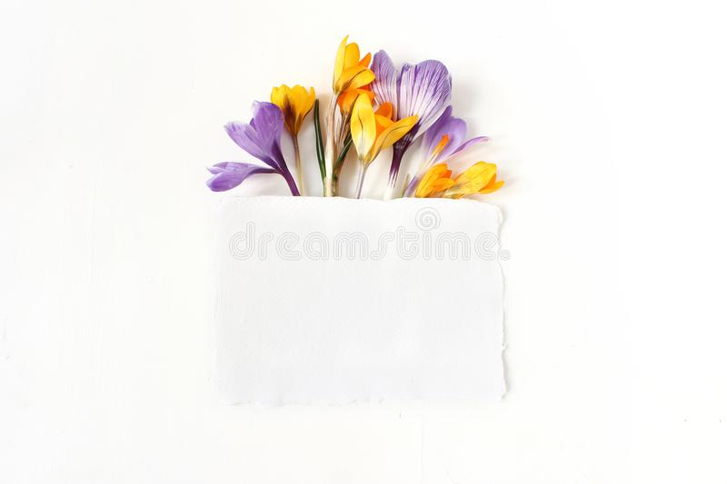 Easter floral composition. Yellow and violet crocuses flowers and blank paper card on white wooden background. Spring royalty free stock images