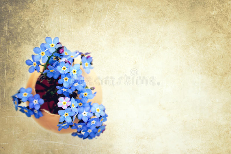 Easter flowers in eggshell. On grunge background royalty free stock photography