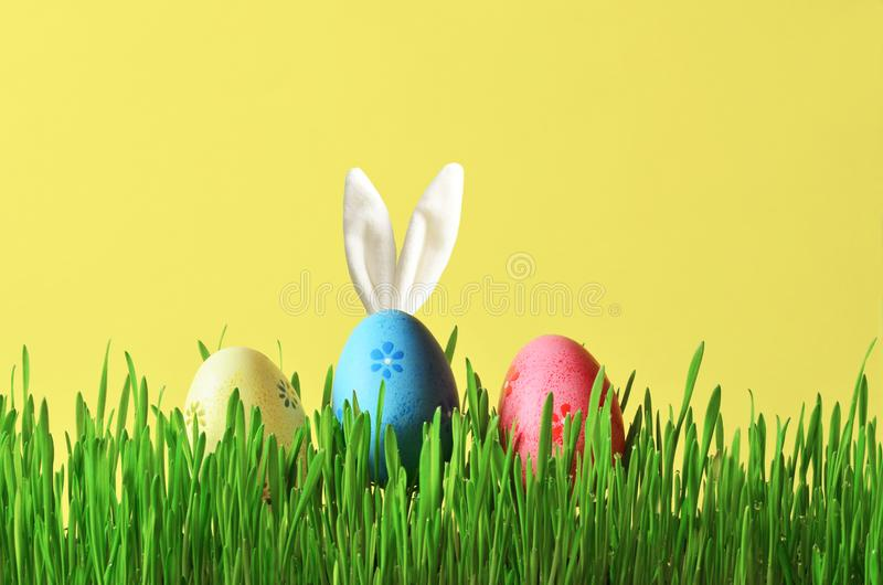 Easter funny bunny on green grass with easter eggs. Easter background. Easter funny bunny on green grass and easter eggs. Easter background stock photos