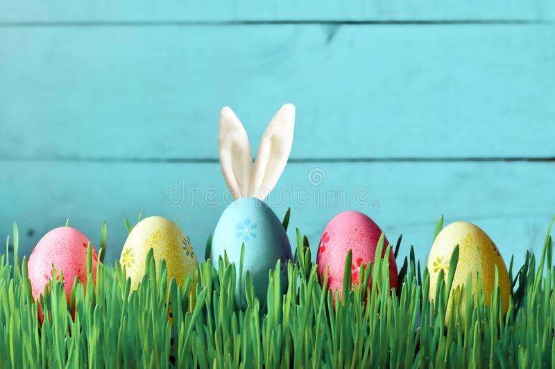 Easter funny bunny on green grass with easter eggs. Easter background. Easter funny bunny on green grass and easter eggs. Easter background royalty free stock photo