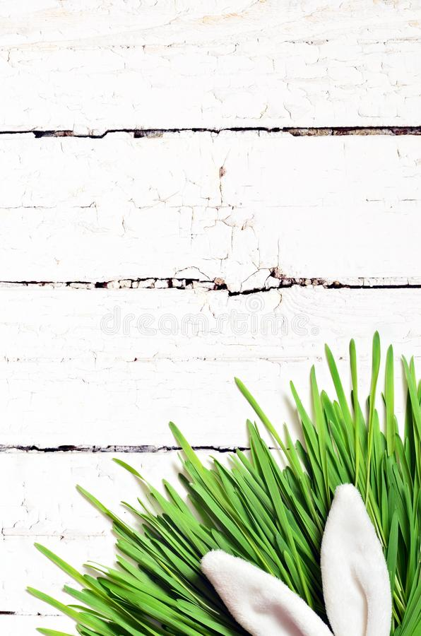 Easter funny bunny on green grass on wooden background. Easter background. Easter funny bunny ears on green grass on wooden background. Easter background royalty free stock photo