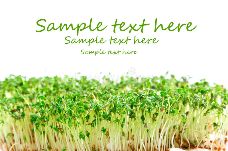 Download Easter garden cress stock photo. Image of growth, cress - 29982726