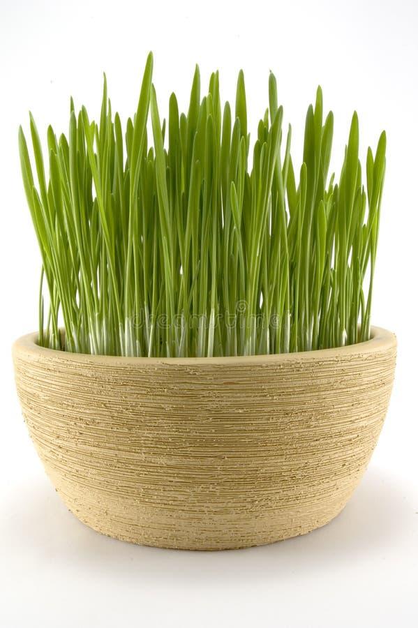 easter gräs royaltyfri bild