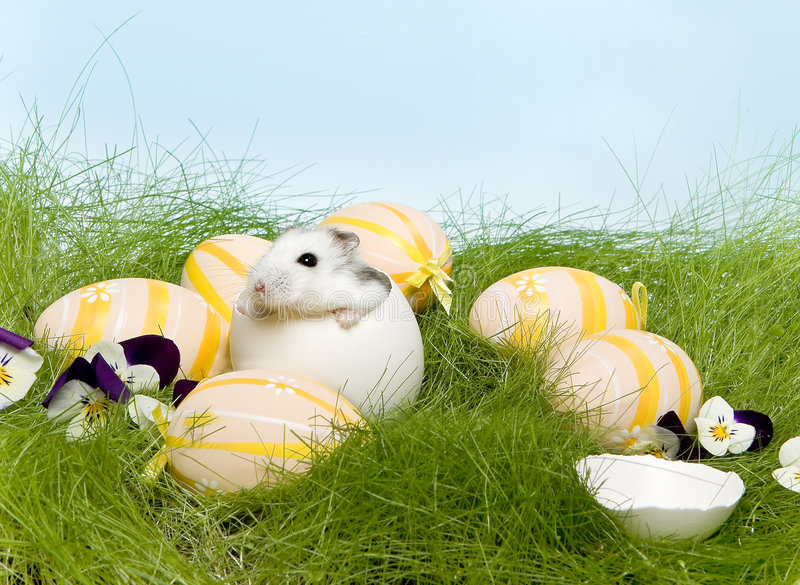 Easter Hamster Stock Images