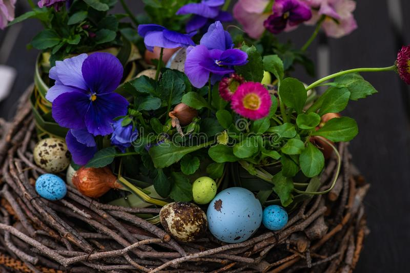 Easter holiday card concept. Easter holiday natural composition with boxwood, colored eggs and spring flowers like tricolor violas etc stock images