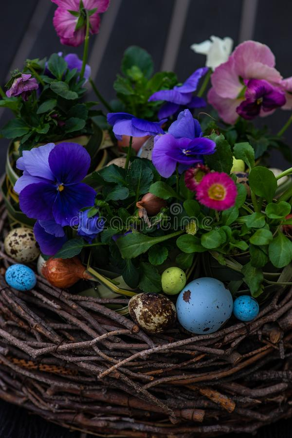 Easter holiday card concept. Easter holiday natural composition with boxwood, colored eggs and spring flowers like tricolor violas etc stock photos