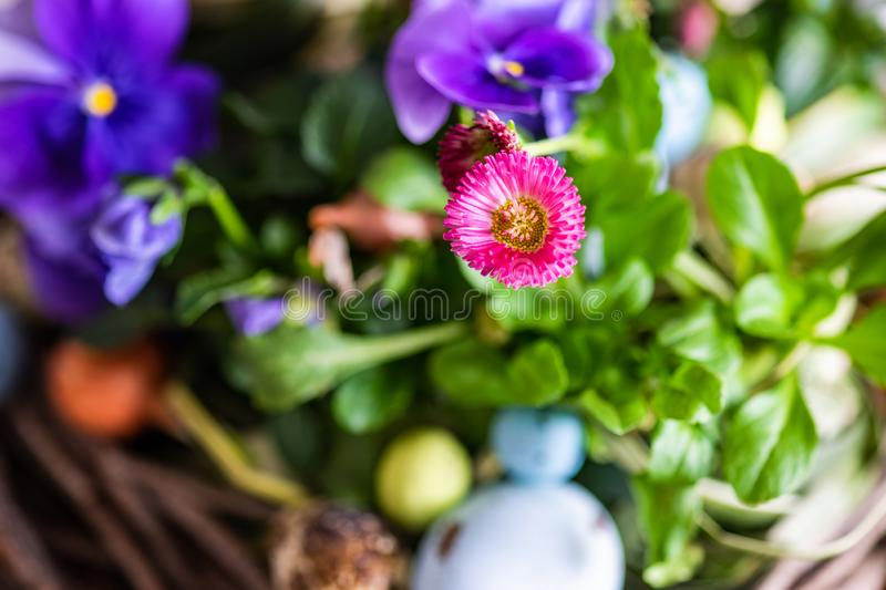 Easter holiday card concept. Easter holiday natural composition with boxwood, colored eggs and spring flowers like tricolor violas etc royalty free stock image