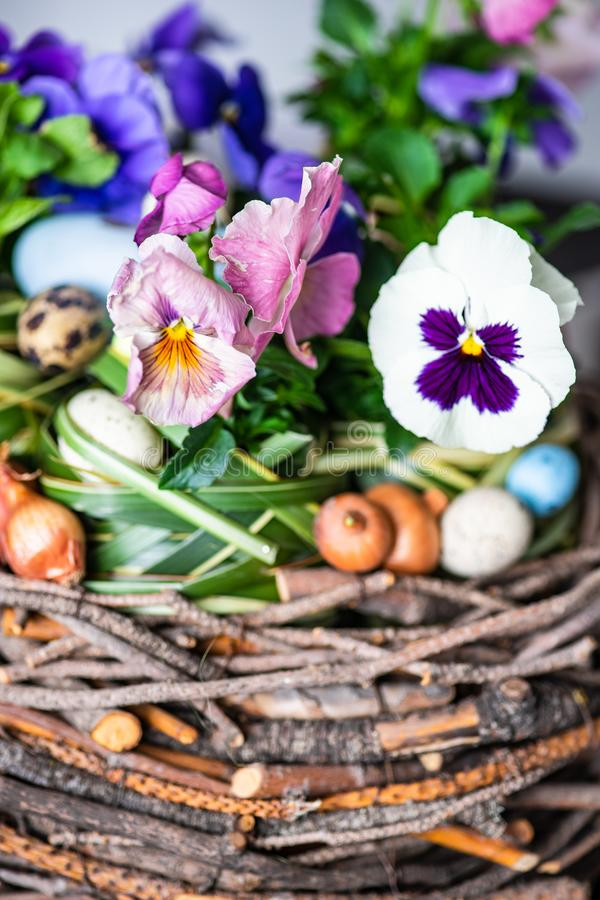 Easter holiday card concept. Easter holiday natural composition with boxwood, colored eggs and spring flowers like tricolor violas etc stock image