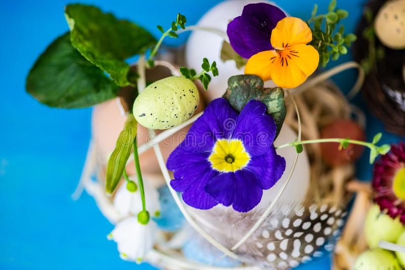Easter holiday card concept. Easter holiday natural composition with first spring flowers like tricolor violas and primerose , colored eggs stock photos