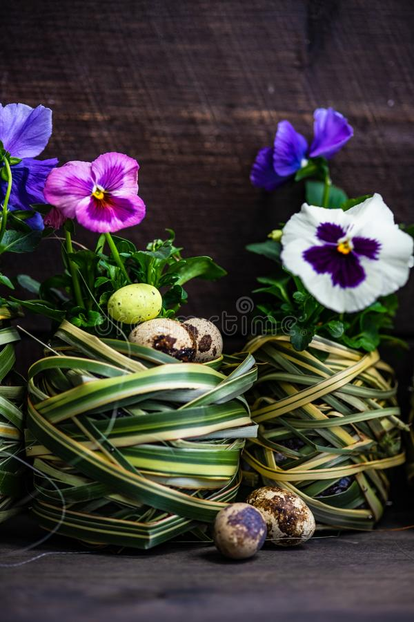 Easter holiday card concept. Easter holiday natural composition with first spring flowers like tricolor violas and primerose , colored eggs stock photo