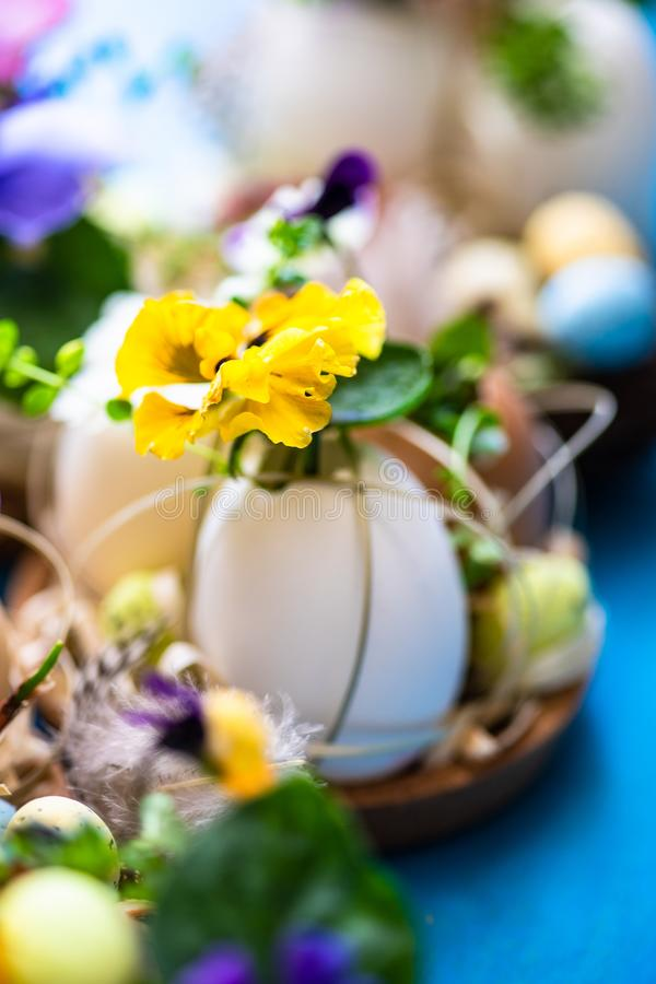 Easter holiday card concept. Easter holiday natural composition with first spring flowers like tricolor violas and primerose , colored eggs royalty free stock photo