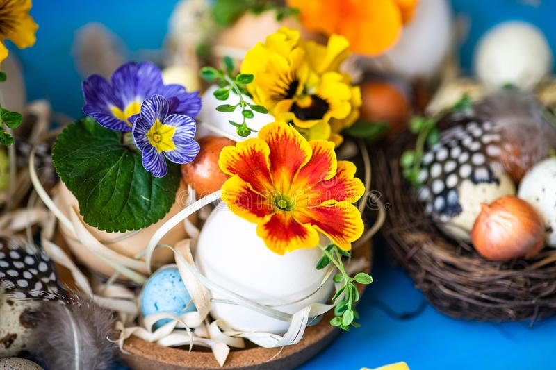 Easter holiday card concept. Easter holiday natural composition with first spring flowers like tricolor violas and primerose , colored eggs royalty free stock photos