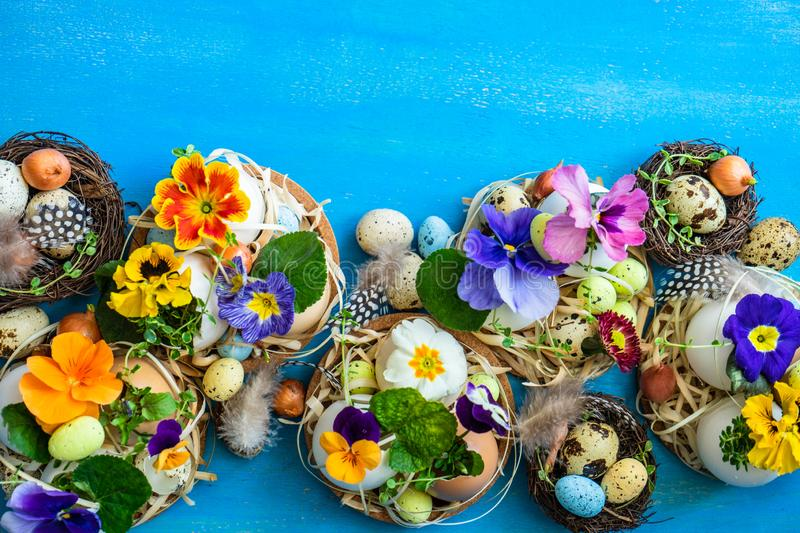 Easter holiday card concept. Easter holiday natural composition with first spring flowers like tricolor violas and primerose , colored eggs royalty free stock image