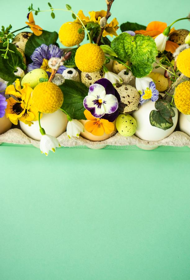 Easter holiday card concept. Easter holiday natural composition with first spring flowers like tricolor violas and primerose , colored eggs stock image