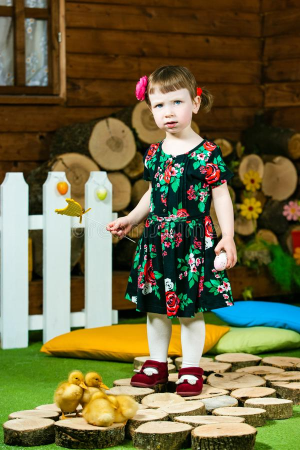 Easter holiday. Cute little girl playing with ducklings. In background a village house. Vertically framed shot royalty free stock image