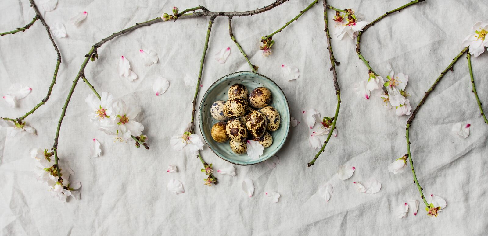 Easter holiday flat-lay with quail eggs and almond tree branches. Easter holiday Spring mood flat-lay with quail eggs in blue bowl and blooming branches of royalty free stock photography