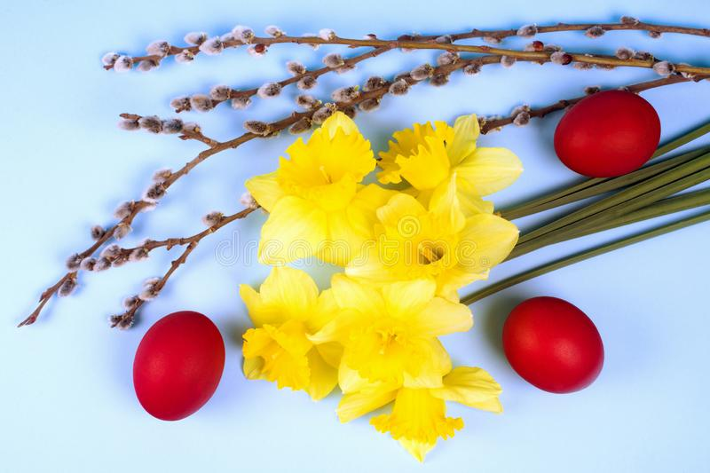 Easter holiday scene. Still life, narcissus flowers, red colored eggs and branch are on blue background stock images