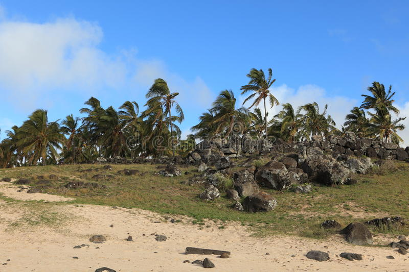 Easter Island Palm Tree Beach Anakena Royalty Free Stock Photography