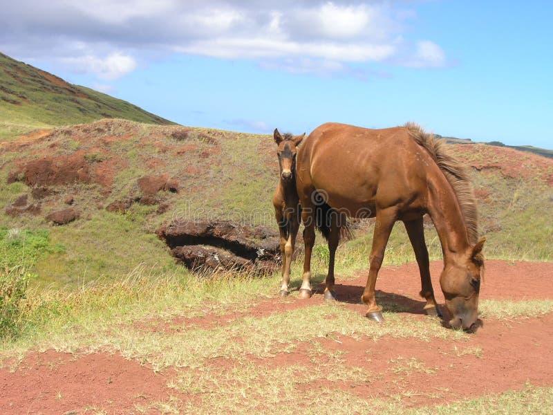Easter Island - Puna Pau Free Stock Image