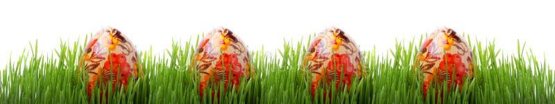 easter jajek trawy odosobniony biel zdjęcie stock
