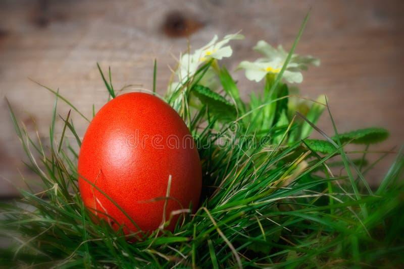 easter jajko kwitnie czerwień zdjęcia stock