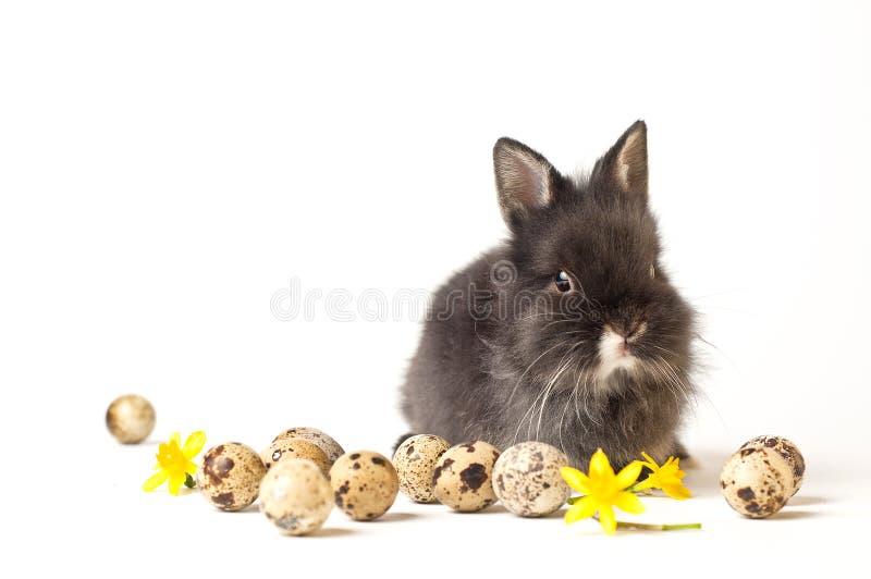 easter kanin arkivfoto