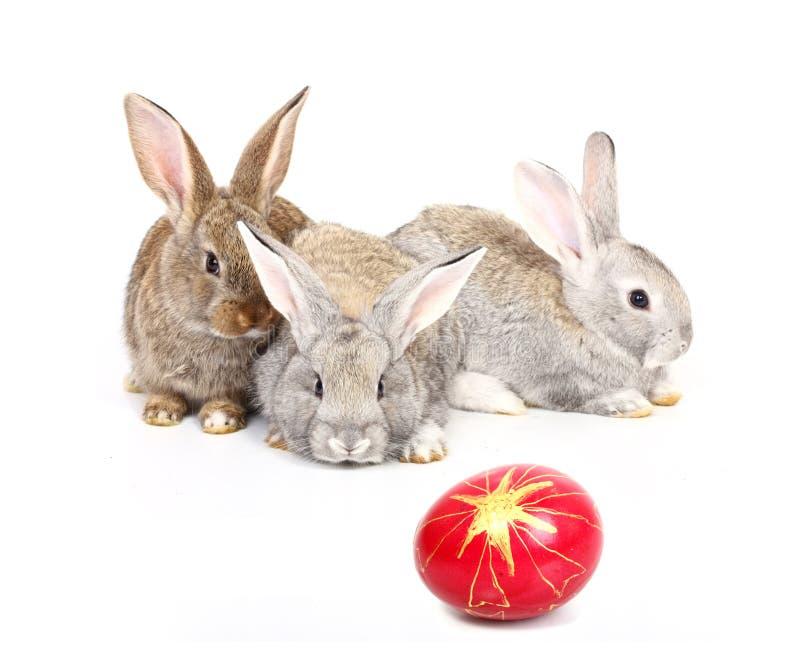 easter kaniner royaltyfri foto