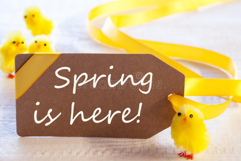 Easter Label, Chicks, Text Spring Is Here. Label With English Text Spring Is Here. Easter Decoration Like Chicks. White Wooden Background. Card For Seasons stock photos