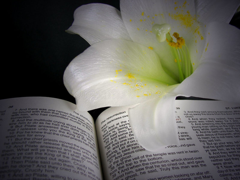 Easter lily illuminated on Bible