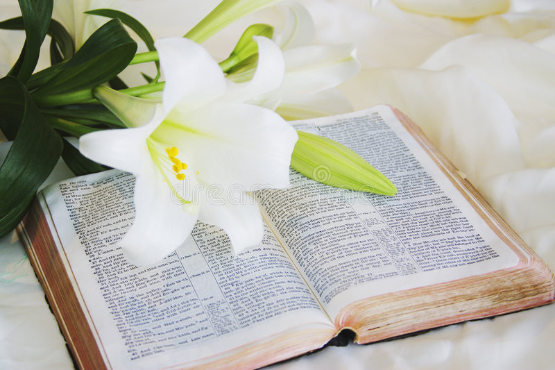 Lily laying on a antique bible on Easter morning. White Lily laying on a old antique bible on Easter morning stock image