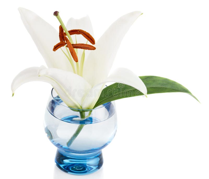 Download Easter lily stock photo. Image of plant, floral, flora - 17846530