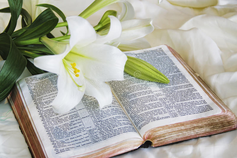 Download Lily Laying On A Antique Bible On Easter Morning Stock Photo - Image: 15626790