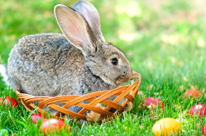 Easter little rabbit smiling while sitting in egg basket royalty free stock photos