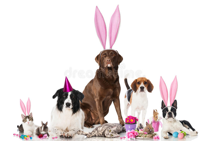 Easter pets. Group of pets isolated on white