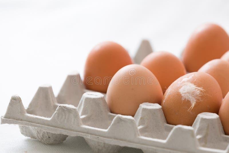 easter przygotowania Wiele jasnobrązowi jajka w paperbox Jeden jajko z białym piórkiem na nim zdjęcia royalty free