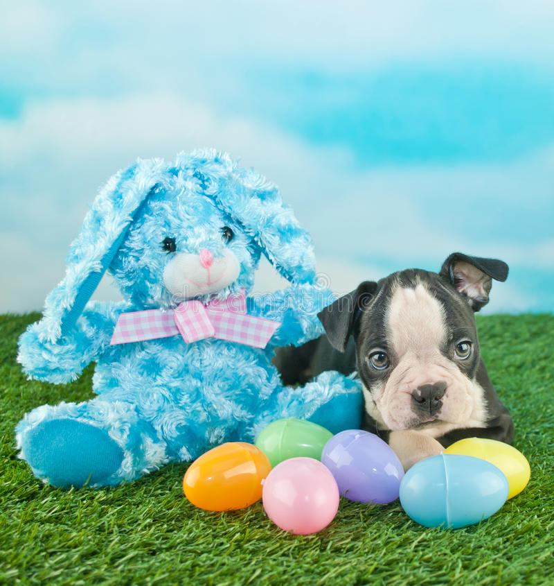 Easter Puppy stock photography