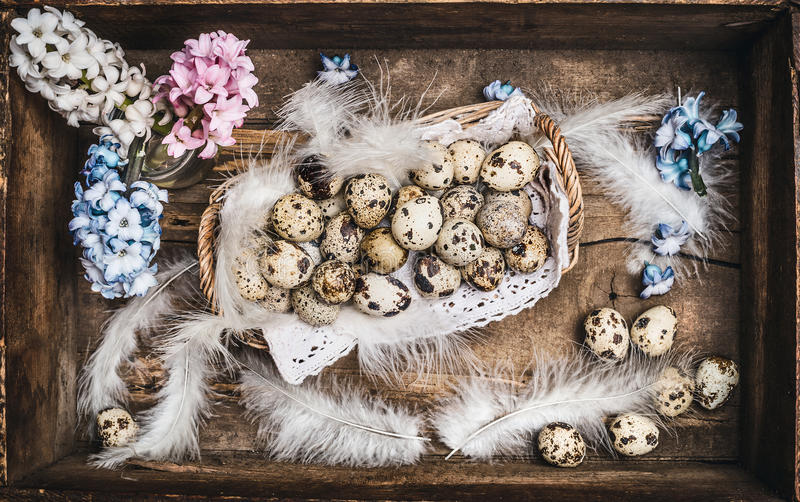 Easter Quail eggs in rustic Basket with spring flowers on dark wooden background stock photo