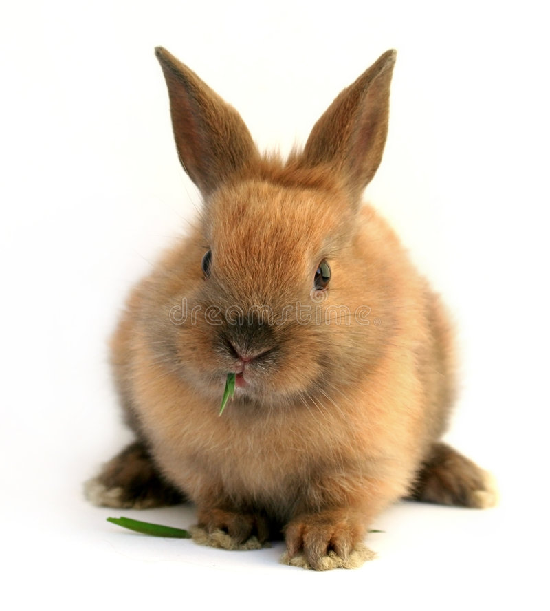 Download Easter rabbit stock image. Image of fluffy, bunny, grass - 4552345