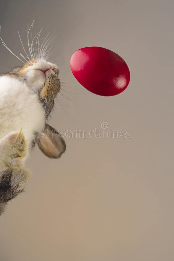 Easter rabbit close to a red egg, shoot form an down angle stock photos