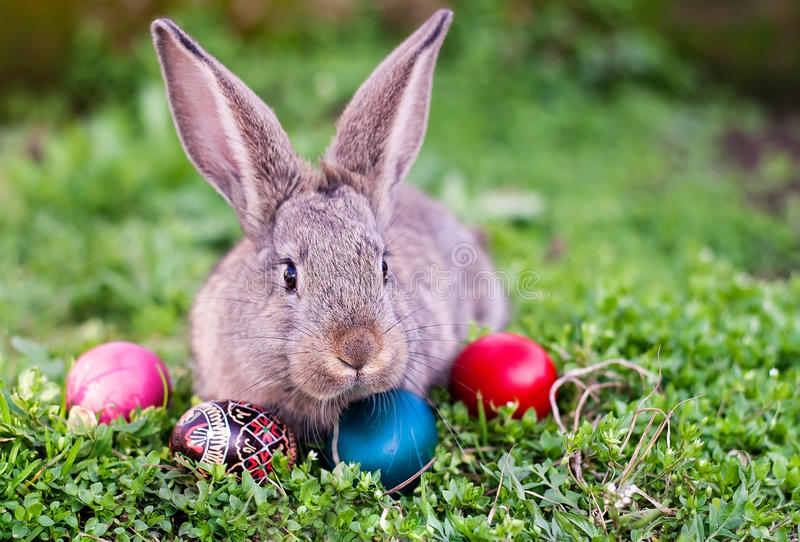 Easter rabbit and Easter eggs stock photos