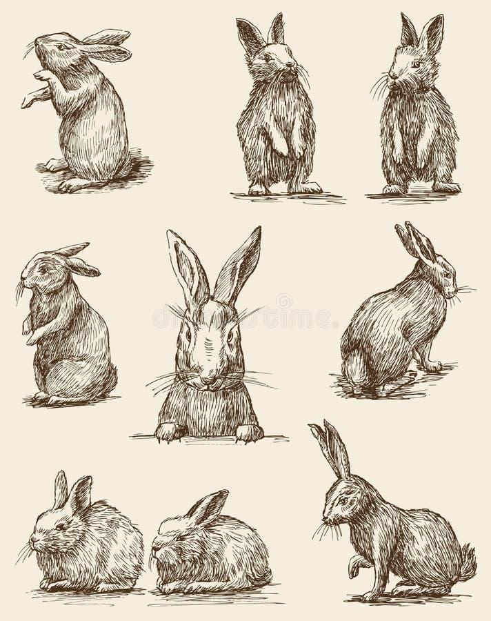 Free Easter Rabbits Royalty Free Stock Photo - 44150855