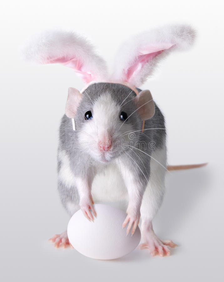 Easter Rat