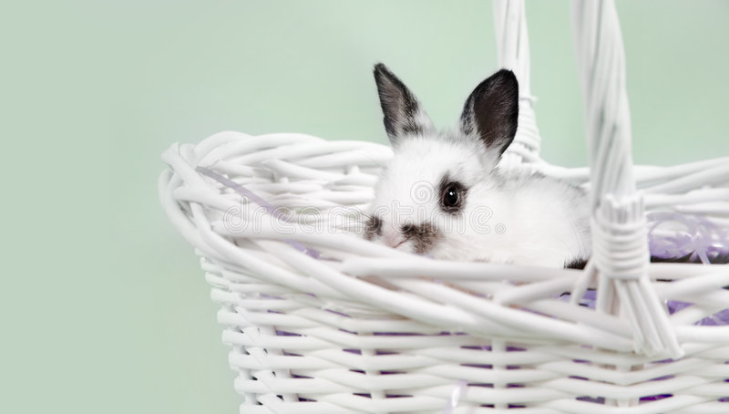 Download Easter Scene stock photo. Image of floppy, find, bunnies - 2026044