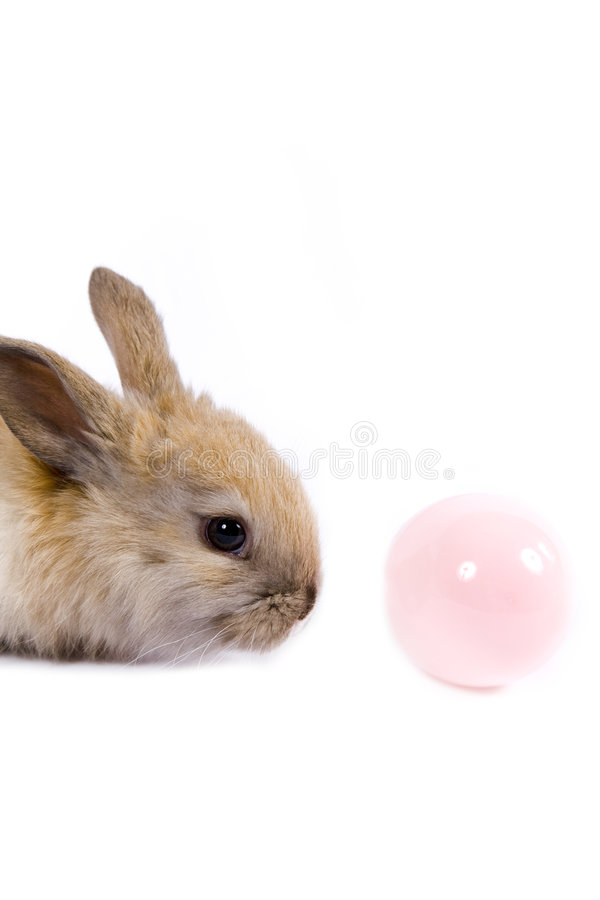 Download Easter Scene stock photo. Image of candies, find, eggs - 2061656
