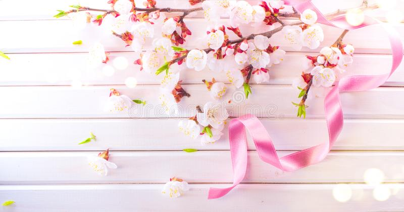 Easter Spring Blossom on white wooden plank background. Easter Apricot flowers on wood border art design. Pink blooming tree royalty free stock photo