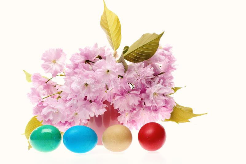 Easter spring composition. Japanese cherry flowers with coloured eggs for Easter isolated on white background. Flora and royalty free stock photo